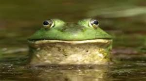 frogs mucus