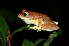 frog_2